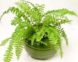 Loại cây hút sóng bức xạ tốt nhất bạn nên trồng trong phòng