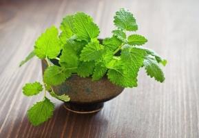 Loài cây quen thuộc hoá thuốc quý bạn nên trồng trong vườn nhà