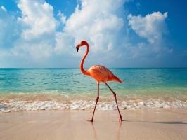Loài chim có chiếc mỏ kỳ quái nhất thế giới