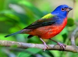 Loài chim đẹp nhất thế giới