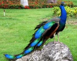 Loài chim hiếm và đẹp nhất thế giới