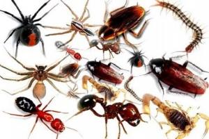 Loài côn trùng độc nhất Việt Nam bạn cần biết