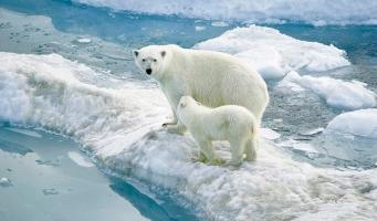 Loài động vật chịu lạnh tốt nhất trên thế giới