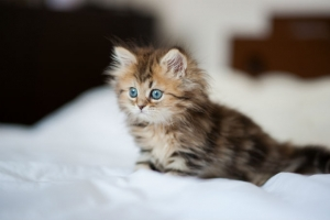 Loài động vật dễ thương nhất thế giới