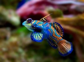 Loài động vật đẹp nhất thế giới
