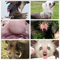 Loài động vật xấu xí nhất hành tinh