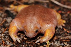Loài ếch kì lạ nhất trên thế giới