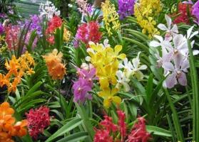 Loài hoa tiết lộ tính cách của bạn đầy thú vị