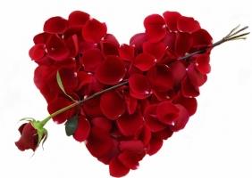 Loài hoa lãng mạn gắn liền với tình yêu