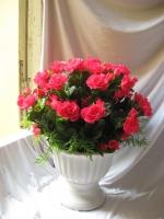 Loài hoa chơi Tết đáng mua và đẹp nhất hiện nay