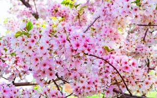Loài hoa có hình dáng lạ kì nhất thế giới