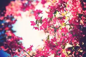Loại hoa đẹp nhất và ý nghĩa của chúng