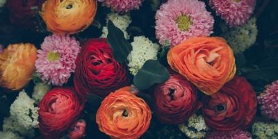 Loài hoa đẹp và ý nghĩa nhất nên dành tặng người yêu vào ngày Valentine 14/2