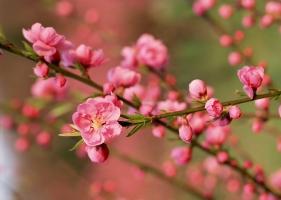 Loại hoa đẹp chưng trong nhà vào ngày Tết