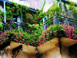 Loài hoa đẹp thích hợp trồng trong nhà