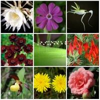 Loài hoa hiếm nhất thế giới