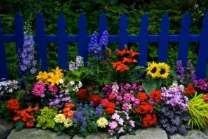 Loài hoa mang lại may mắn
