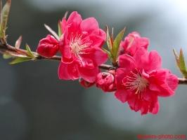 Loài hoa mang lại may mắn và tài lộc cho gia chủ trong năm mới