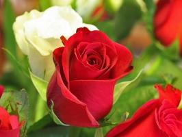 Loài hoa mang ngôn ngữ của tình yêu