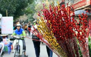 Loại hoa phong thủy cho ngày Tết mang tài lộc cho gia chủ trong năm mới