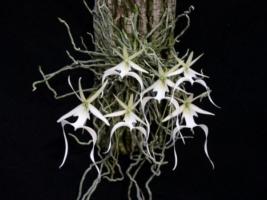 Loài hoa quý hiếm và tuyệt đẹp trên Trái Đất