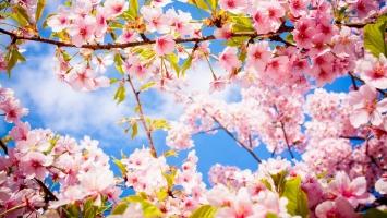 Loại hoa thường cắm ngày tết trong gia đình ở miền Bắc