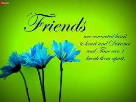 Loài hoa tượng trưng cho tình bạn