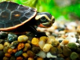 Loài rùa lạ nhất thế giới có thể bạn chưa biết
