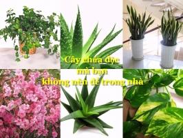 Loài thực vật có chứa độc bạn không nên để trong nhà