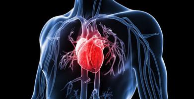 Loại thuốc bổ cho tim mạch tốt nhất hiện nay