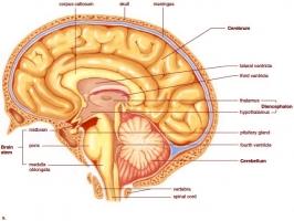 Loại thuốc bổ não tăng cường trí nhớ tốt nhất hiện nay