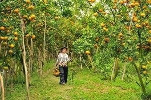 Loại trái cây đặc sản nổi tiếng nhất Việt Nam