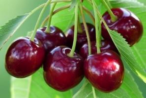 Loại trái cây giúp mẹ bầu giải nhiệt ngày nóng