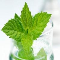 Lợi ích tuyệt vời của lá bạc hà đối với sức khỏe