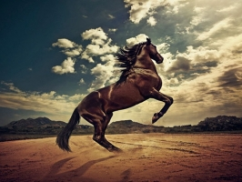 Giống ngựa tốt nhất thế giới