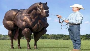 Chú ngựa kỳ lạ và quý hiếm nhất thế giới