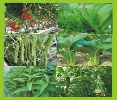 Nguyên tắc trồng rau an toàn