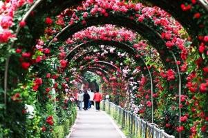 điều cần biết về lễ hội hoa hồng Bulgaria - Đảo hoa hồng lớn nhất Việt Nam
