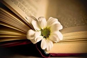 Cuốn tản văn hay nhất về tình yêu