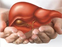 Thực phẩm ảnh hưởng nhất đến gan của bạn