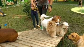 Top 10 Dịch vụ trông giữ thú cưng ngày Tết tại TPHCM uy tín nhất