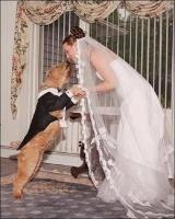 """Phong tục cưới hỏi """"dị"""" nhất thế giới có thể bạn muốn biết"""