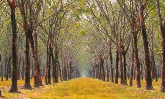 địa điểm du lịch hấp dẫn tại Bình Phước