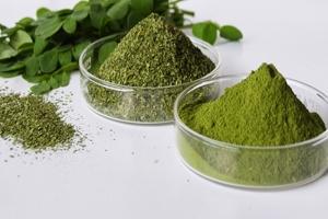 địa chỉ cung cấp hạt, lá, bột chùm ngây chất lượng nhất TP. HCM
