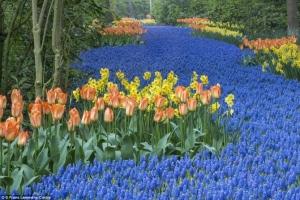 Thiên đường hoa đẹp nhất thế giới có thể bạn muốn biết