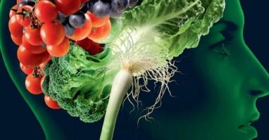 Thực phẩm bổ dưỡng cho não và tăng cường trí thông minh tốt nhất