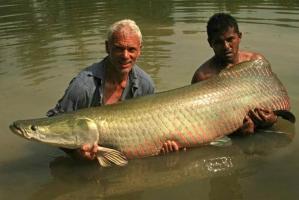 Thủy quái đáng sợ sống tại sông Amazon