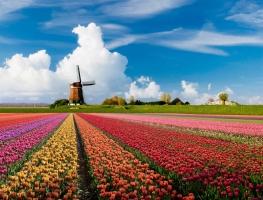 điều thú vị hấp dẫn nhất của đất nước hoa tulip - Hà Lan