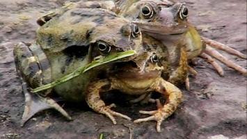 Loài vật kì lạ nhất thế giới sẽ khiến bạn hoảng hốt
