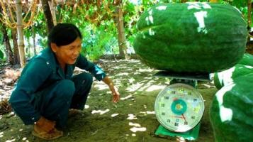 Trái cây lạ giúp nông dân Việt Nam làm giàu